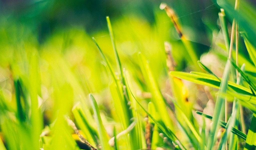 植树节在春光中找寻绿色童话,勇敢跟环境污染说NO!!!